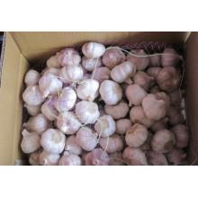 Alho Branco Normal (6.0cm) para Exportar