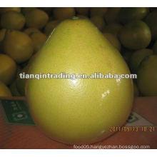 fresh pomelo 2012