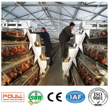 24 Stall Poulailler Commercial Poultry Cage Poulet Batterie Coop