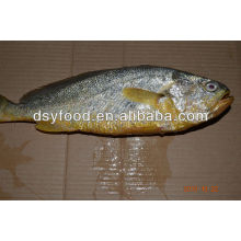 Hot sale yellow croaker gift box package