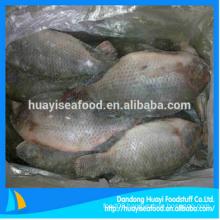 fresh frozen whole tilapia fish for wholesale price