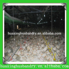 Chicken house farm construction building broiler poultry shed design