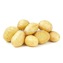 Organic Potato Protein Powder