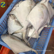 Frozen Style and Fish Product Type frozen white pomfret fish Frozen Style and Fish Product Type frozen white pomfret fish