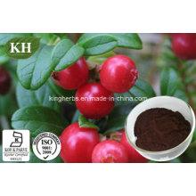 Poudre d'extrait de Lingonberry, poudre d'extrait de myrtille rouge N ° CAS: 84082-34-8
