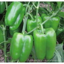 HSP23 Cufa petit vert brillant F1 hybride douce / graines de poivron dans les graines de légumes