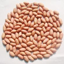 De Bonne Qualité Noyau de cacahuète à vendre (24/28)