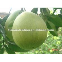 exportação pomelo