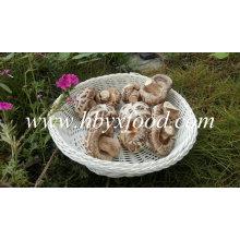 Getrockneter Shiitake-Pilz ohne Stiel (weißer Blütenpilz)