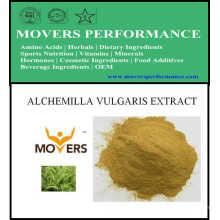 Hot Slaes Cosmetic Ingredient: Alchemilla Vulgaris Extract