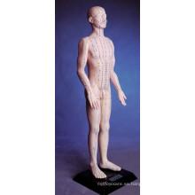 Modelo de la acupuntura del cuerpo humano