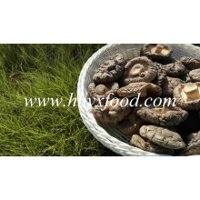 Vente chaude surface lisse frais champignon shiitake