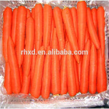 Natural carrot at wholesale price of fresh carrot