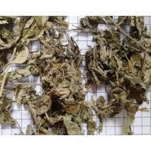 Artemisiae Argyi Folium de calidad superior