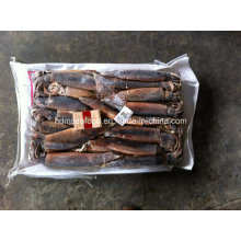 Frozen Argentina Squid for Human Consumption