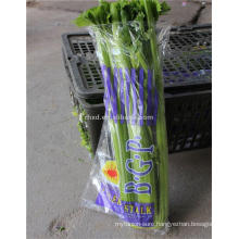 New crop of 2017 celery cultivation with low price
