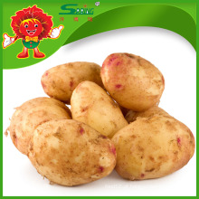 Batatas Doce Chinês Instantâneas