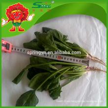 Verduras verdes libres de contaminación espinacas congeladas marcas espinacas frondosas