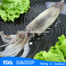 Frozen squid whole round u3