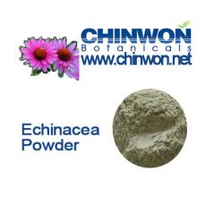 Echinacea purpurea en polvo