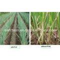 Agriculture/Cosmetics/Food/Medical Grade Gamma Poly Glutamic Acid Y PGA