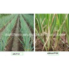 Agriculture / Cosmétiques / Aliments / Médical Grade Gamma Poly Glutamic Acid Y PGA