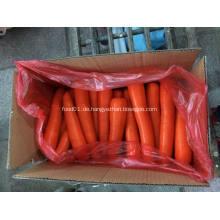 Frische kleine Shandong-Karotte