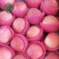 frischer Apfel des chinesischen grünen Apfels vom Porzellan