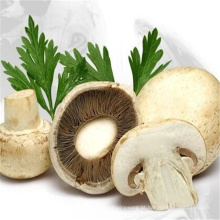 Pure Natural Plant Branco Botão Cogumelo Extrato em Pó