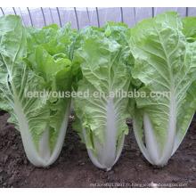 KC03 Bobang croissance rapide f1 hybride pakchoi graines graines de chou chinois
