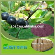Pure natural and hot sale acai berry extract with top quality