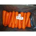 Nova cenoura fresca com certificação GAP