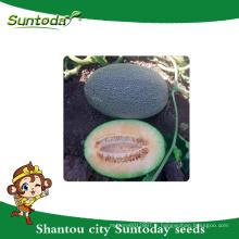 Suntoday oblong nett type oblong assot vert croûte avec orange-rouge chair légume hami melon japonais muna graines n4000 (18004)