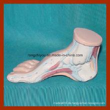Medizinisches menschliches gewölbtes Fußmodell menschliches anatomisches Fußmodell
