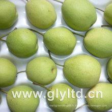 Green New Shandong poire de haute qualité