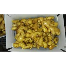 2016 New crop organic fresh ginger