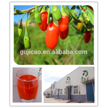 2016 ningxia wolfberry/Free sample Lycium barbarum /fresh goji berries
