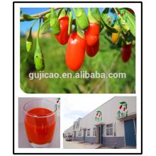 2016 ningxia wolfberry / Muestra gratis Lycium barbarum / frescas bayas de goji