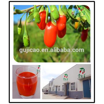 2016 ningxia wolfberry/Free sample Lycium barbarum /fresh goji berries