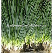 MSH01 Baitou blanc top op échalotes vertes, graines d'oignon vert
