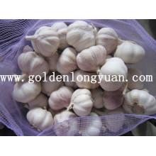 4.5cm Alho branco normal embalado com saco de malha 10kg