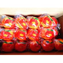 10kgs / Carton Mandarina de mandarín fresca china de calidad superior