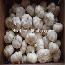 Fresh pure white garlic /5 head in net bag/ 10kg/carton export to Egypt