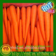 Frische Karotte China-Verkauf Plastikkarotte