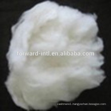 Good Length with Good Feeling Raw White Favorable Cashmere Fiber