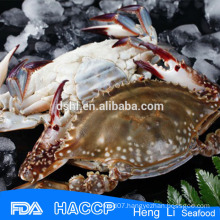 HL003 Rich nutrition swimming crab for sale