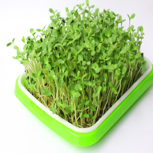 Soil-free Food Grade Pp Healthy Grower Tray