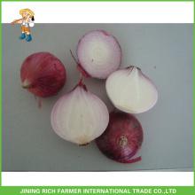 Haute qualité et meilleur prix Oignon frais chinois taille 5-7cm