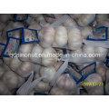 Normal de ajo blanco 3p mercado de Japón