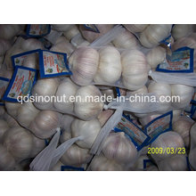 Normal White Garlic 3p Japan Market